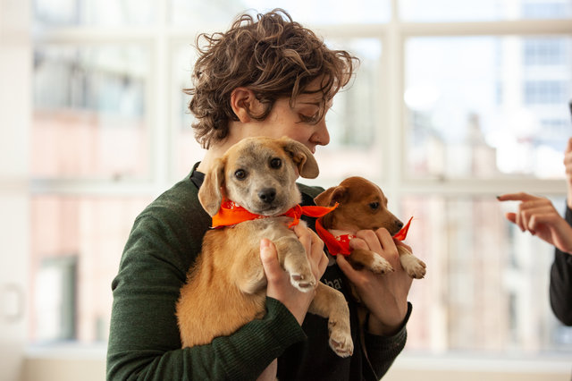 On April 5, 2019 Apple, three-month-old dachshund mix, became ASPCA's 100,000th relocated animal.