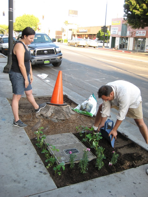 This image of guerrilla gardening was taken by Umberto Brayj and is licensed under Creative Commons Attribution 2.0 Generic license.