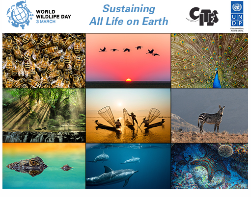 World Wildlife Day 2020 Theme:  Sustaining All Life on Earth